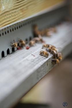 la ruche piquet-2195
