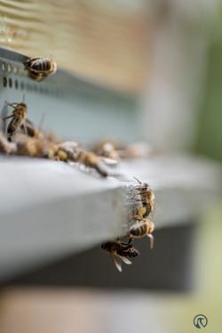 la ruche piquet-2260