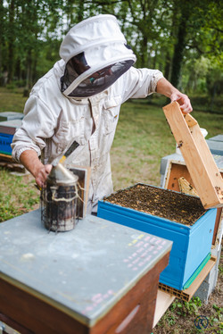 la ruche piquet-1424