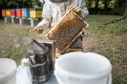 la ruche piquet-1712