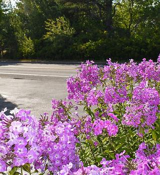 flowers parking c.jpg