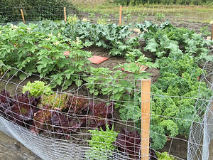 soil, topsoil, north pole topsoil, fairbanks, topsoil, jurassic topsoil, jurassic, garden soil
