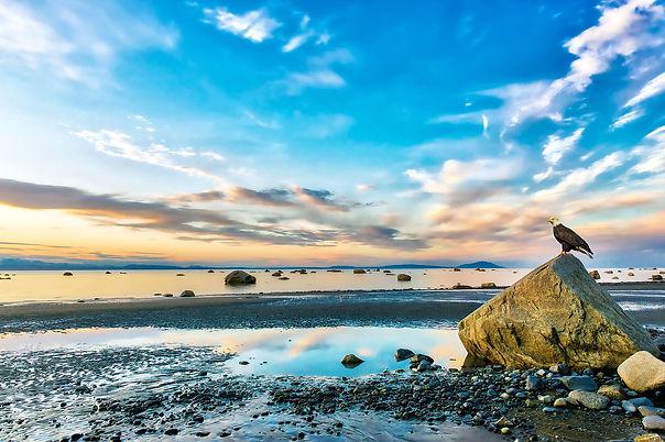 bigstock-Bald-Eagle-Perched-On-A-Rock-O-267405805.jpg