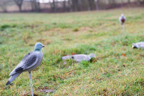 Volschalen geflokte duif