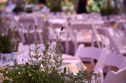 חתונה בסגול