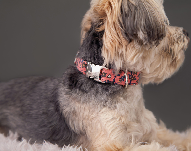 Tweed Dog Harness and Dog Leash
