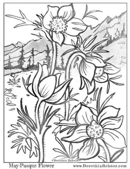 May - Pasque Flower