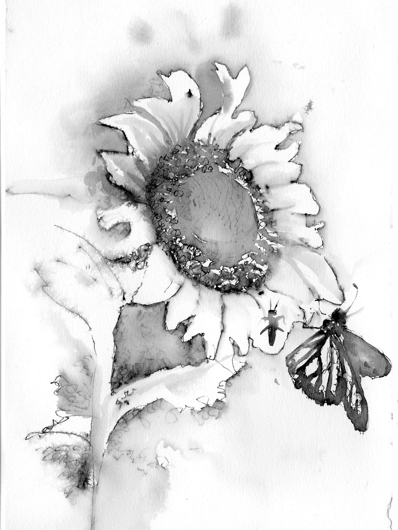 Sunflower Drawing 2