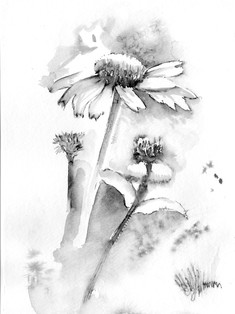 Cone Flower Drawing
