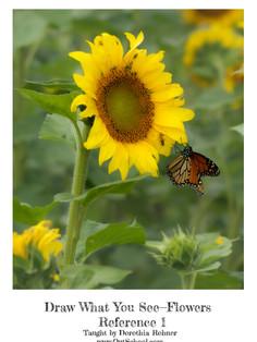 Sunflower - Color