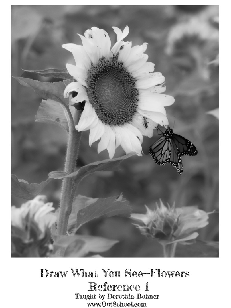 Sunflowers - BW