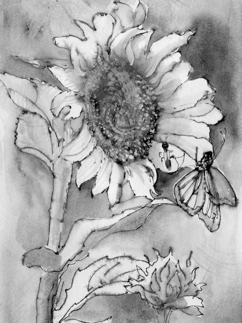 Sunflower Drawing 1