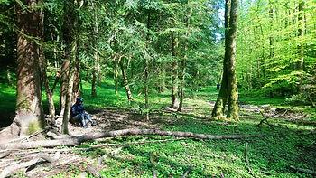 bain de forêt Porrentruy Alam nature & yoga