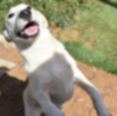 חיוך כלב.jpg