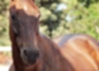 סוס.PNG