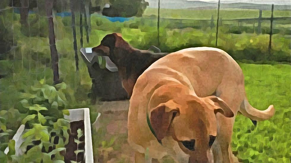 קורס מוקלט של 9 מפגשים האנטומיה והפיזיולוגיה של התנהגות כלבים