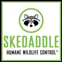 skedaddle.png