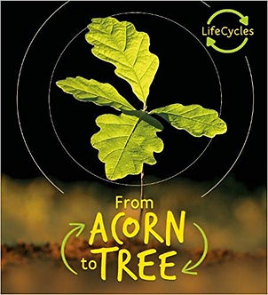 Lifecycles - Acorn to Tree