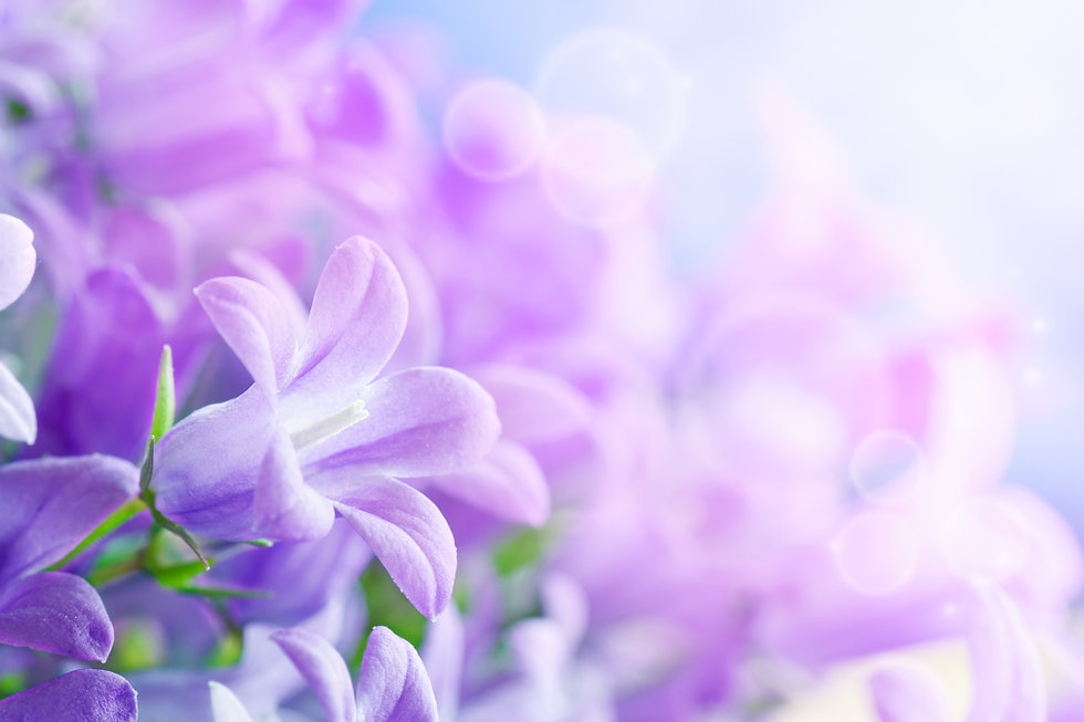 Beautiful spring background with campanu