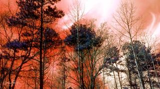 arboles fuego1a.jpg