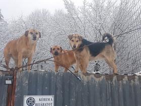 Borika, Riki, Kázmérka