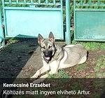 Artur, Miskolcon
