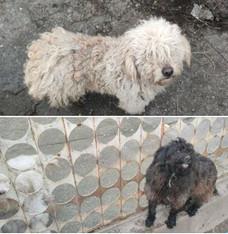 Két kis kutya Járdánházáról