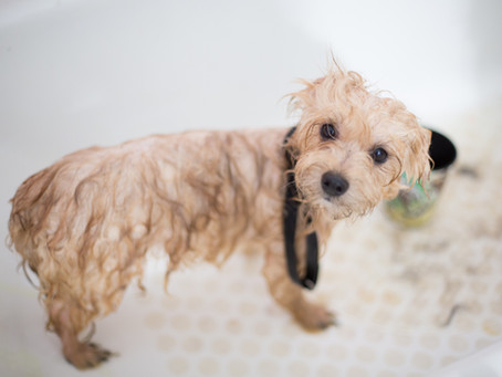 Oh no! Stop shaving down your dog!