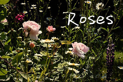 June-roses-eco-florist-devon_low.jpg