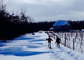 snowshoe-pec-sugarbush-vineyard_edited.j