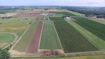 farmlands.JPEG