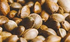 CBG seeds.jpg