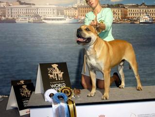 Победа Вальда на WORLD DOG SHOW HELSINKI 2014 !!!
