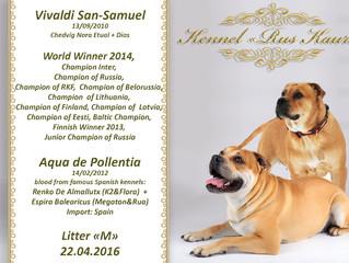 """Щенки КА ДЕ БО - Vivaldi San-Samuel & Aqua de Pollentia: Litter """"M"""" - 22.04.16"""