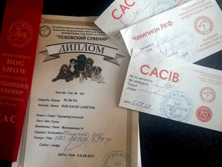 "INTERNATIONAL DOG SHOW CACIB FCI  ""Pskovskij Suvenir-2017"""