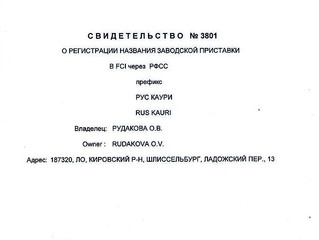 Новости питомника Рус Каури!