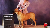All-Russian Dog Show (CAC)