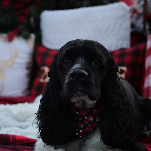 Ayers - Christmas Mini