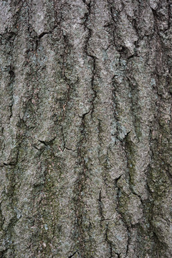 Tree13_1581.jpg