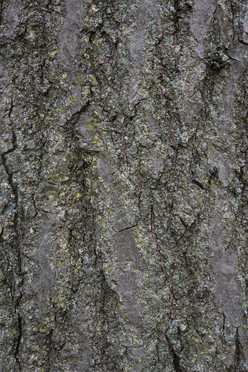 Tree6_1670.jpg