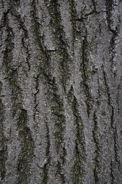 Tree3_1694.jpg