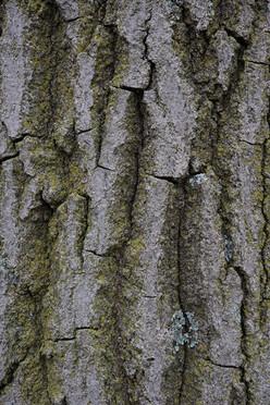 Tree19_1495.jpg