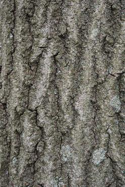 Tree15_1547.jpg