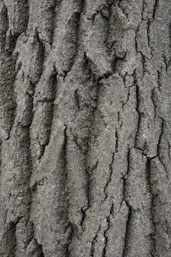 Tree14_1571.jpg