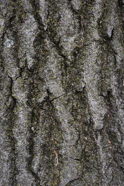 Tree4_1703.jpg