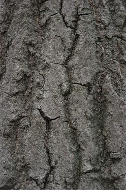 Tree8_1650.jpg