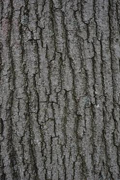 Tree11_1607.jpg
