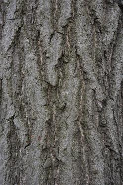 Tree10_1624.jpg