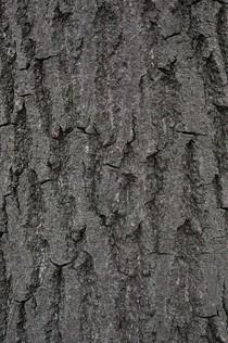 Tree 1_1712