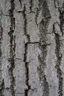 Tree18_1502.jpg